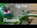 Download Chameleon Cage Tour in Mp3, Mp4 and 3GP