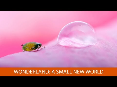 Wonderland: A Small New World