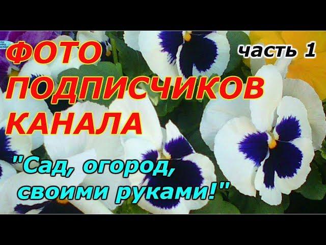 """ФОТОАЛЬБОМ НАШИХ ПОДПИСЧИКОВ-канал """"Сад, огород, своими руками!""""!!! ЧАСТЬ 1"""