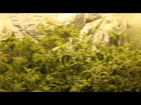 Hydroponics Grow Tent   4x8