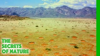 Mystery of the Fairy Circles - The Secrets of Nature