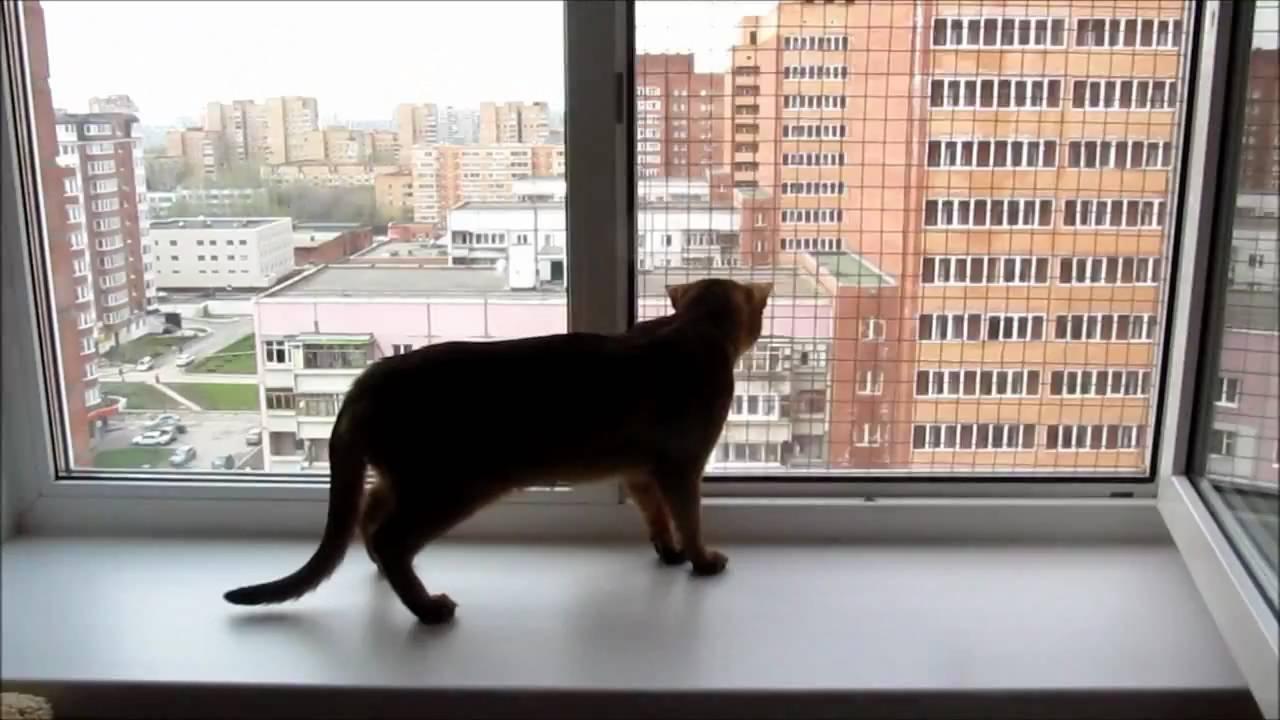 Сетка на окно для кошек своими руками 78