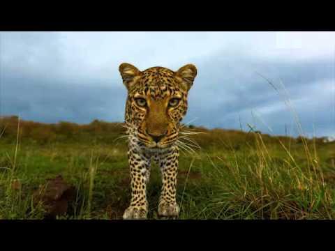 Radio 5AA Adelaide interview with Kym Illman - Africa on Safari