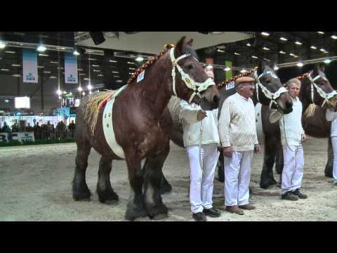 Draft Horses Breeding Movies http://www.pic2fly.com/Draft+Horses ...