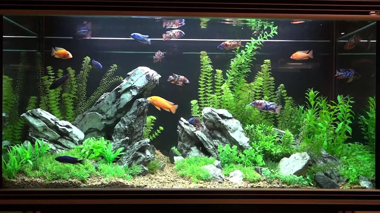 Камни в аквариум своими руками в домашних условиях 79