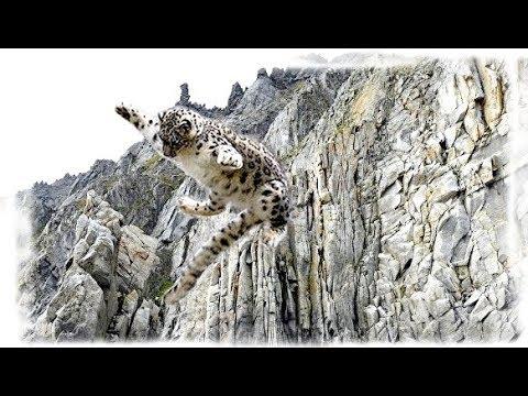 Снежный Барс. В пропасть за добычей