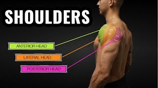 The Best Science-Based Shoulder Workout for Size and Symmetry