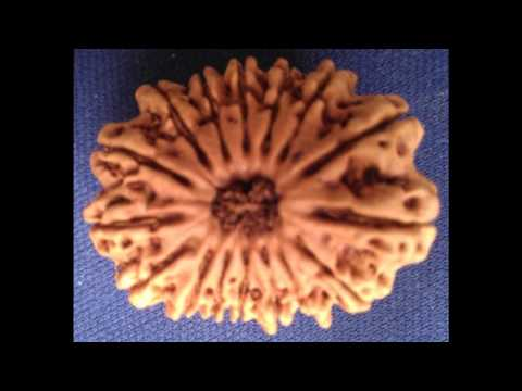 Mahalaxmi Mantra With Rudraksha Nepal,rudraksha India video