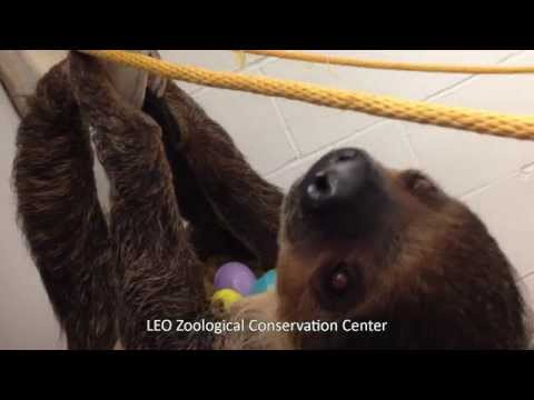 LEO Zoological Conservation Center's Unique Animals Celebrate Easter