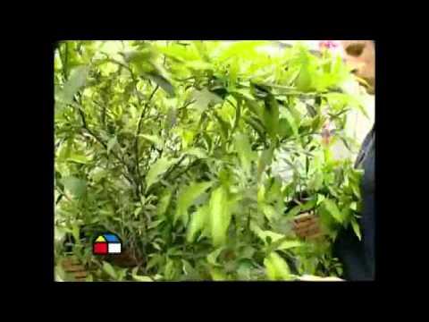 Como decorar tu terraza con plantas youtube - Decorar terrazas con plantas ...