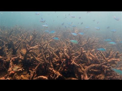 Great Barrier Reef Suffers Largest Die-off