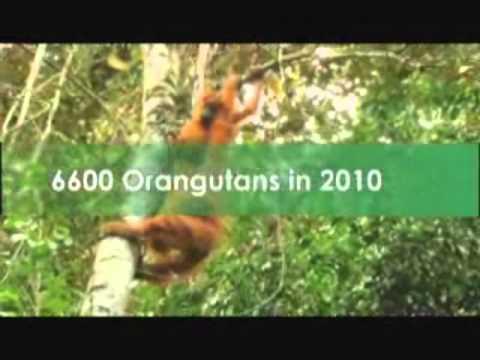 NEWS - UNEP - Spanish Soccer Star Carles Puyol Saving Orangutans - 12/08/2011