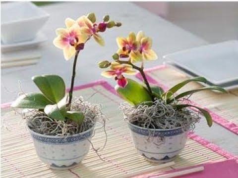 Мастер-класс | Как пересаживать орхидею? 3 разных вида | Ботанический сад им. Гришка, Киев