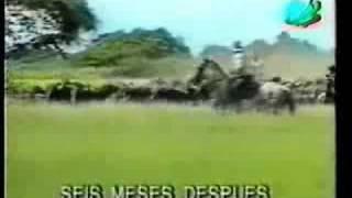 Pura Sangre /1994/-penultimo capitulo-parte 2 /in Bulgarian/ 10:12