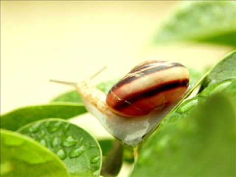 かたつむり A Japanese Children's Song snail Or katatsumuri video