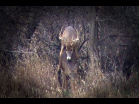 """Triple XXX Rated Deer Hunting! T.O.P. """"Flashback"""" Video!"""