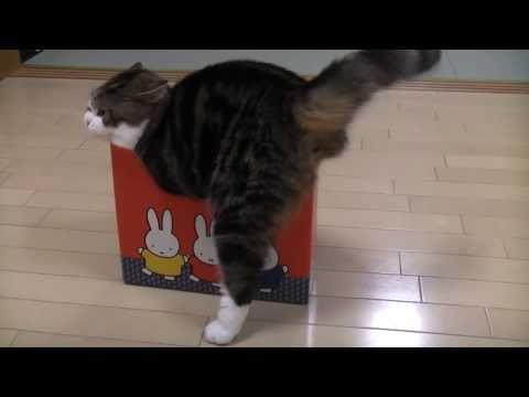 いろいろな小さ過ぎる箱とねこ。