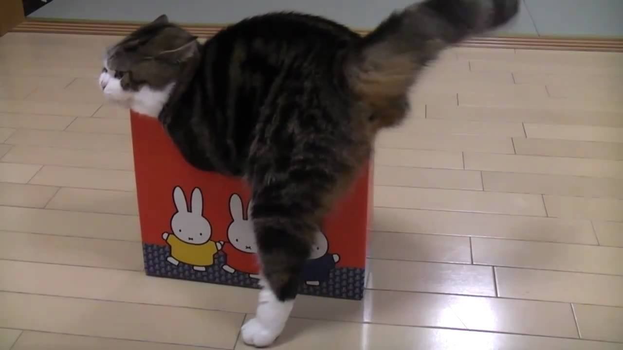 Youtube Cat In Small Boxes