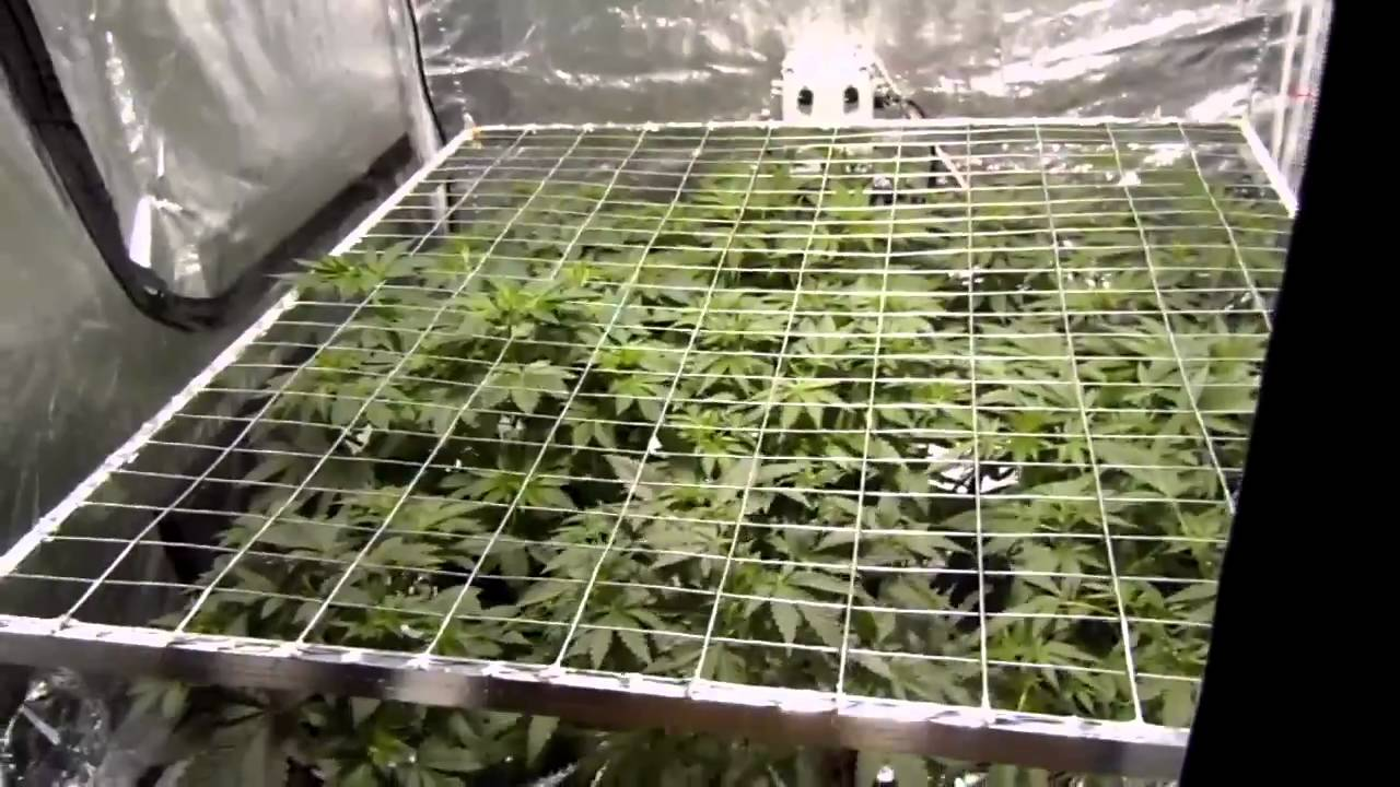Indoor Ebb And Flow 9 Site Grow White Widow Crystal And
