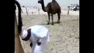 camel shits on his head