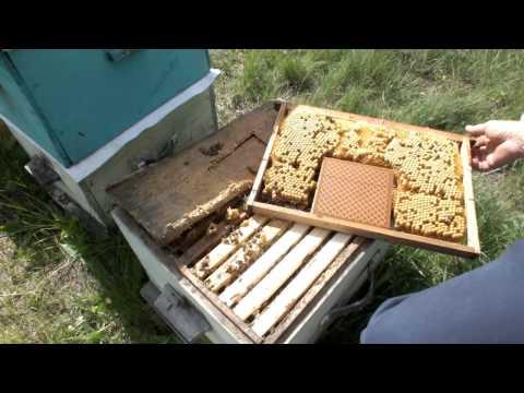 приманка для пчелиной матки