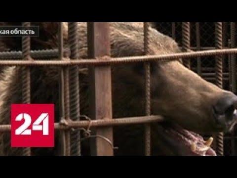 В Иркутской области медведь отгрыз руку посетителю кафе