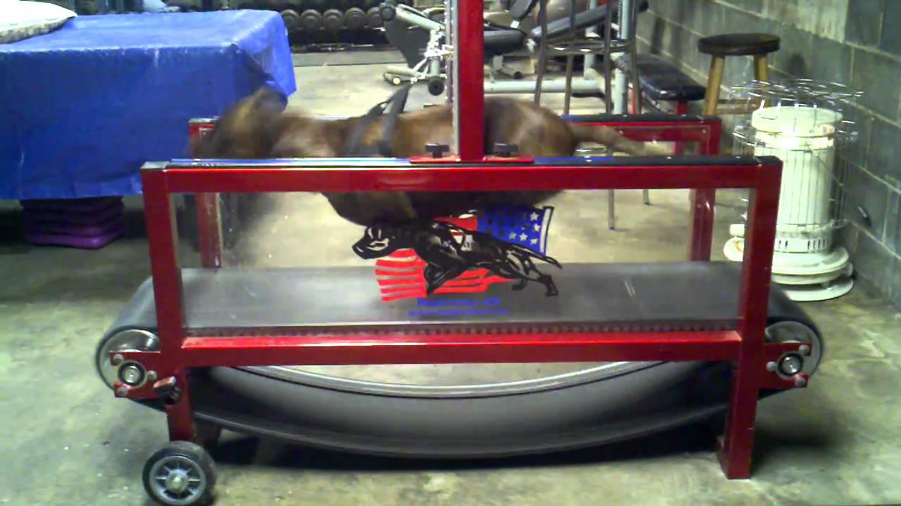Dog Treadmill For Sale