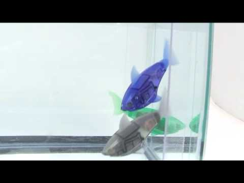 Underwater HEXBUG AquaBot shark toys in action