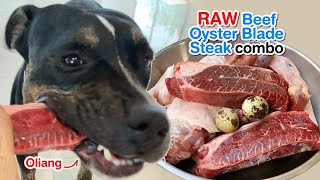 Oliang 1st time VS. Beef Oyster Blade Steak combo [ASMR] RAW diet MUKBANG 犬が生の肉を食べる 개는 날 음식을 먹는다 4K