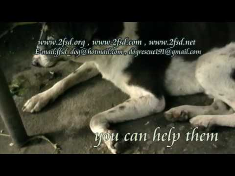 Dog rescue 191 Nasal VG. Tumor ซอยวัดหนองแขม