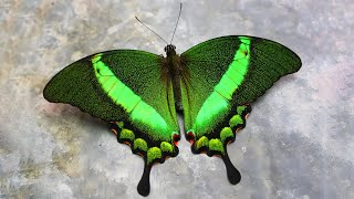 10 Most Beautiful Butterflies on Planet Earth