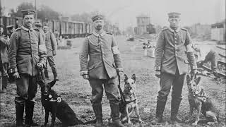 Photos of German Army Dogs During World War 1 (1914-1918)