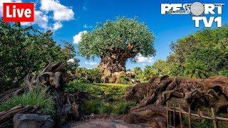 🔴Live: Disney's Animal Kingdom Fun in 1080p Walt Disney World Live Stream - 7-13-19