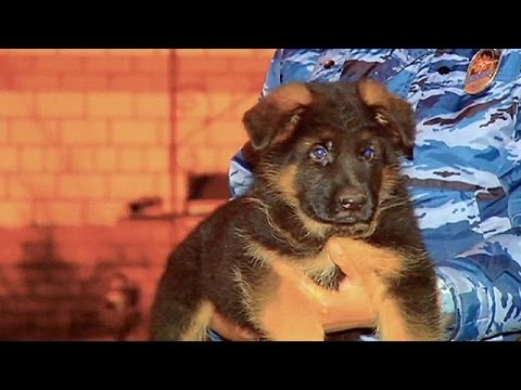 روسیه در همبستگی با فرانسه در ارتباط با حملات هفته گذشته پاریس توله سگی را به این کشور اهدا می کند