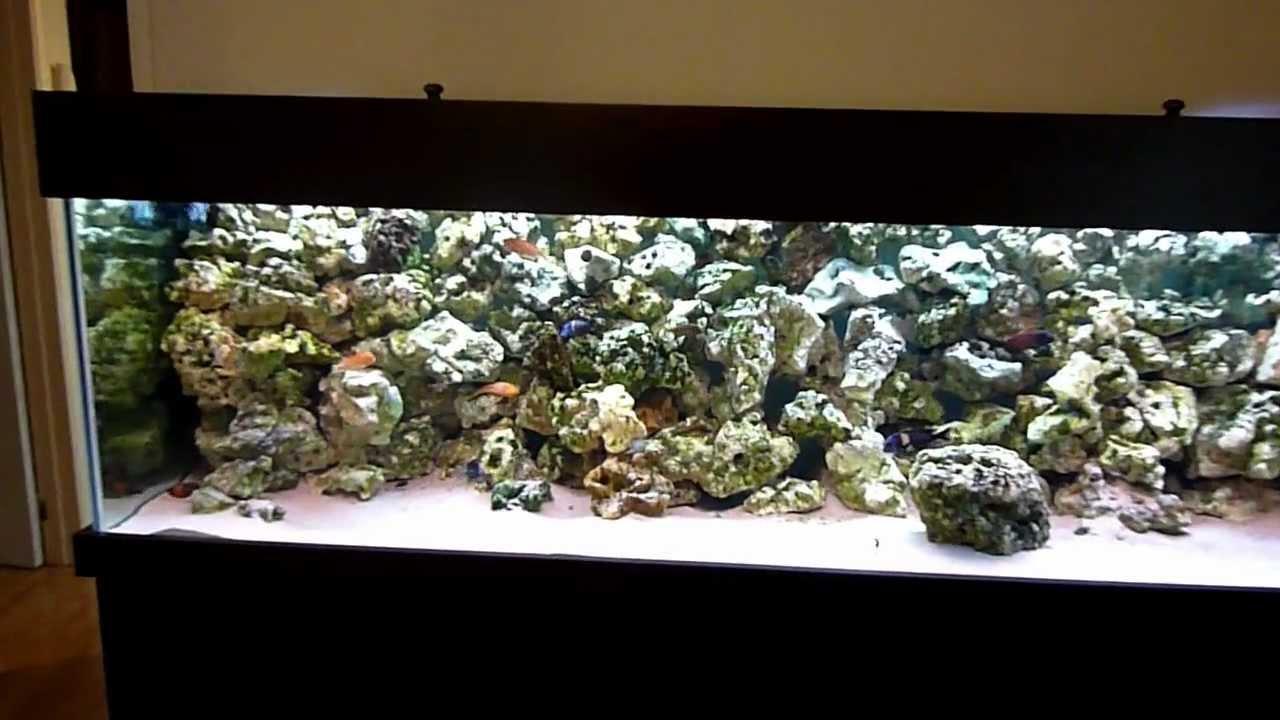 Tropheus fish tank aquarium 750l phase 2 youtube for Fish tank youtube