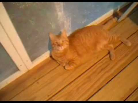 Pussy Porch video