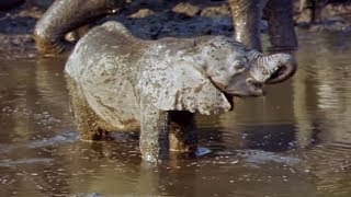 Elephants Empire 🐘- Baby Elephant | Elephant Documentary | Natural History Channel