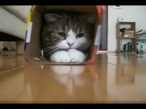 If You Haven t Seen Maru, It s Time You Did!