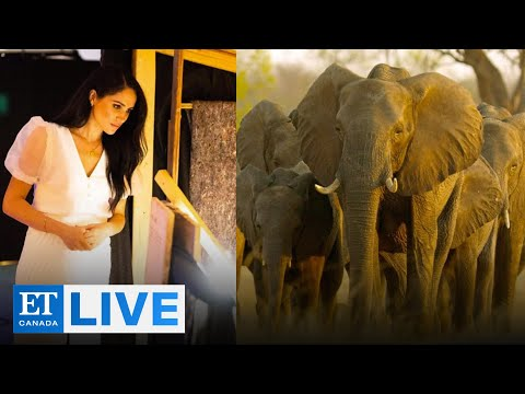 Reaction To Meghan Markle's 'Elephant' Narration