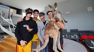 SURPRISING LUCAS AND MARCUS WITH BABY KANGAROOS!