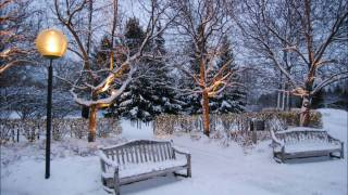 Winter's Timeless Beauty at the Chicago Botanic Garden (Widescreen 16_9)
