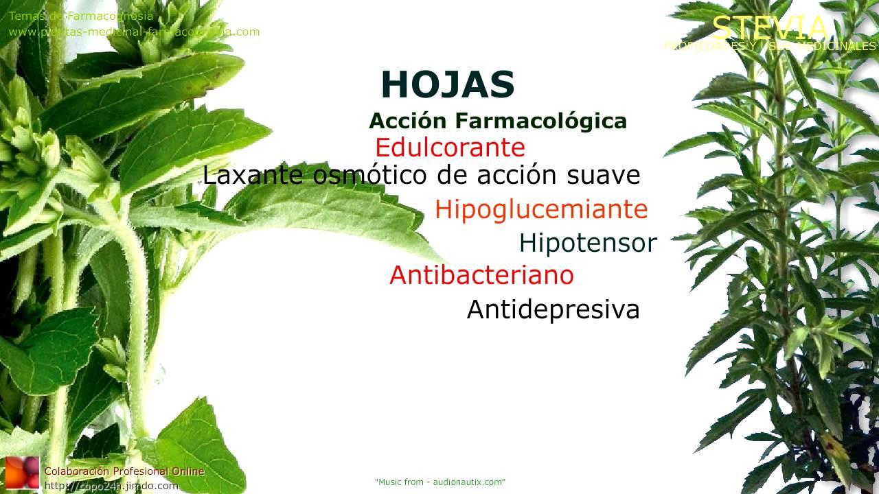stevia propiedades y beneficios usos medicinales de la