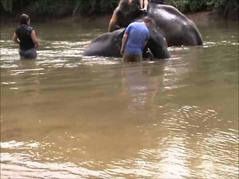 Elephant Ride & Swim in Thailand