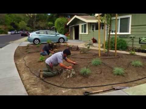 D L  LANDSCAPING SERVICES Project Fairfax, CA