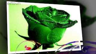 10 rosas para você