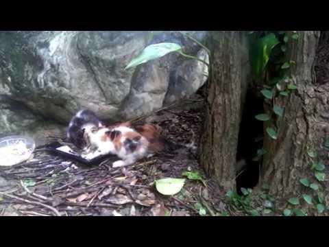 森に子猫たちの食事を置い...