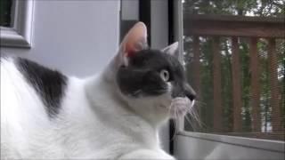 TATATATA CAT