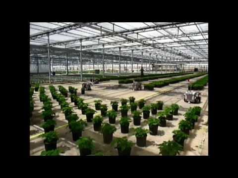 Metrolina Greenhouses: Spacing plants with Harvest Automation HV-100 robots