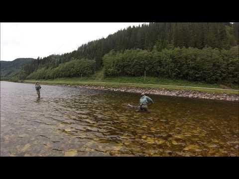 Gaula 2014 Sawada Salmon