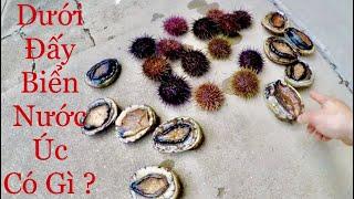 Dưới Đấy Biển Nước Úc Có Gì ?